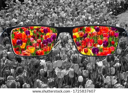 Through glasses frame. Colorful view of colorful tulips in glasses and monochrome background. Different world perception. Optimism, hopefulness, mental health concept. Foto stock ©