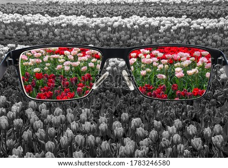 Through glasses frame. Colorful view of colorful tulips in glasses and monochrome background. Different world perception. Optimism, hopefulness, mental health concept. Сток-фото ©