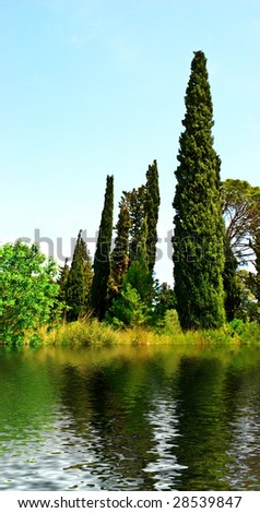 Thuja, cypress and other trees on the riverside.