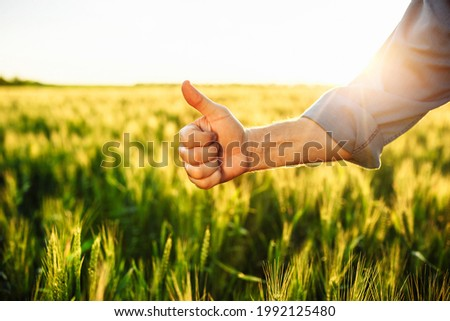 Thumb up sign on the background of wheat field. Close shot of a farmer's hand with the finger up showing like and good sign. Fruitful wheat harvest prediction and high expectations for the new crop Сток-фото ©