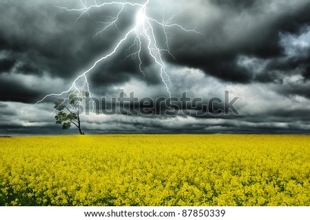thunderstorm under alone tree in yellow field