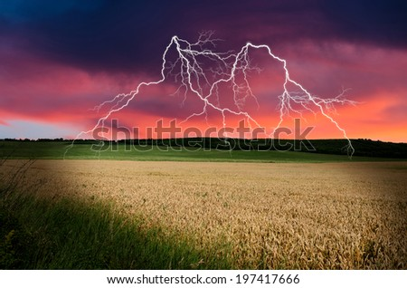 thunderstorm with lightning in wheat land