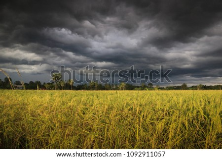Thunderstorms over rice fields