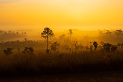 Thung Salaeng Luang is grassland savannah in Thailand. Misty morning sunrise at Thung Salaeng Luang National Park, Phetchabon, Thailand. Beautiful landscape of foggy sunrise in grassland savannah.