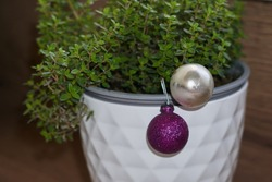 thyme grows in a white pot, wooden background.