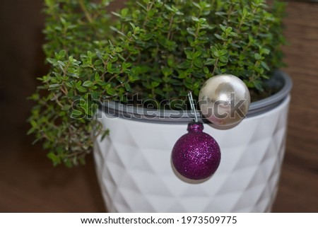 thyme grows in a white pot, wooden background. Stock foto ©
