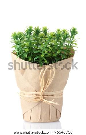 thyme herb plant in pot with beautiful paper decor isolated on white #96648718