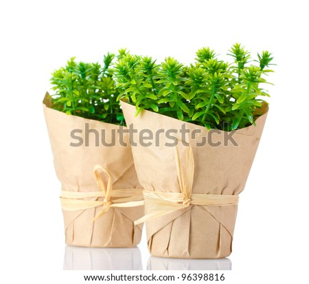 thyme herb plants in pots with beautiful paper decor isolated on white #96398816