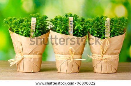 thyme herb plants in pots with beautiful paper decor on wooden table on green background #96398822
