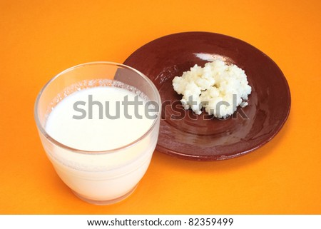 Tibetan milk mushroom and glass of kefir