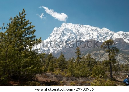 Tibetan road with firs in Himalayan mountain and blue sky.