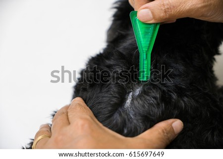 tick and flea prevention for a dog with long fur, lice and mites on White background.