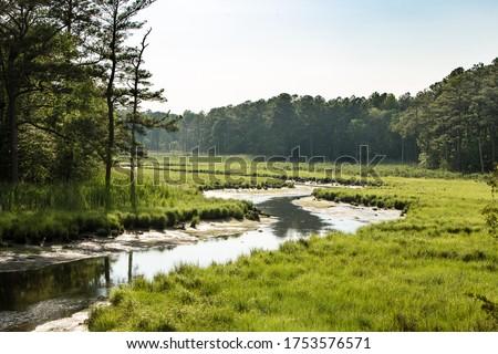 tidal marsh Delaware east coast