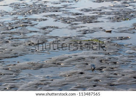 Tidal Mud Flats, California