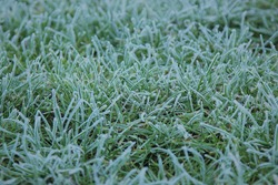 tidewater green grass covered with hoar. frozen nature. natural texture