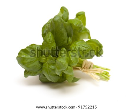 tied bunch of basil isolated on white background