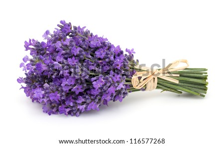 tied bunch of lavender isolated on white background