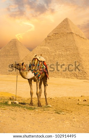 Tied camel with a colorful saddle waiting for its owner in front of the pyramids of Giza with an orange sunset sky in Cairo, Egypt. Vertical copy space