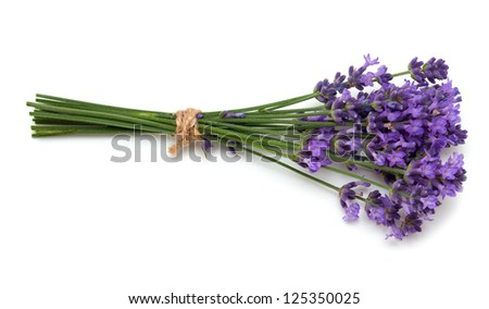 tied lavender flowers - stock photo
