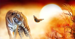 Tiger and fantasy sunset in jungles with butterfly and palm tree. Wildlife background and beautiful panthera tigris, spectacular warm sun light, dramatic red cloudy sky. Portrait of pride wild animal.