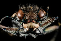 Tiger Beetle from one of the old sand mines that line the Patuxent River, Macro specimen   , Flying insect , face