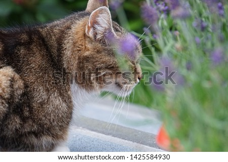 tiger cat and his flowers on Saturday #1425584930