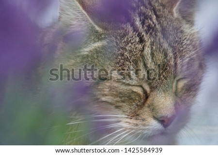 tiger cat and his flowers on Saturday #1425584939
