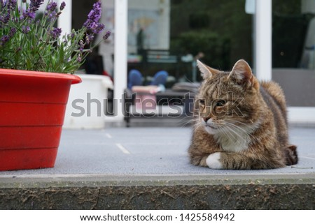 tiger cat and his flowers on Saturday #1425584942