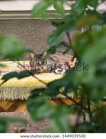 Tiger cat resting, captured through a tree's branches #1449039500