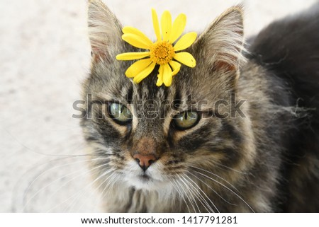 Tiger Cat with Daisy on forehead #1417791281