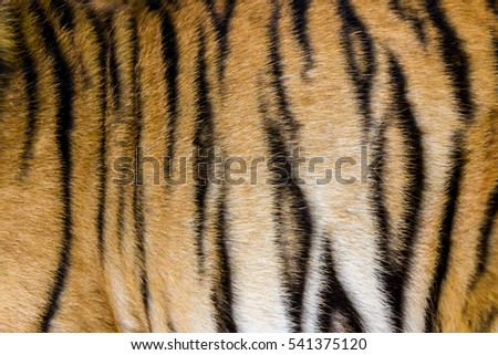 Tiger fur in a close-up, as a background image