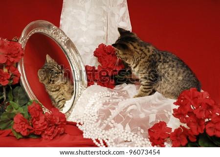 Tiger Kitten Looking into Mirror