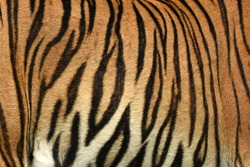 Tiger Print strip of skin pattern background