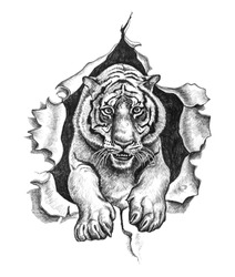 Tiger ripped metal. Pencil drawing illustration.