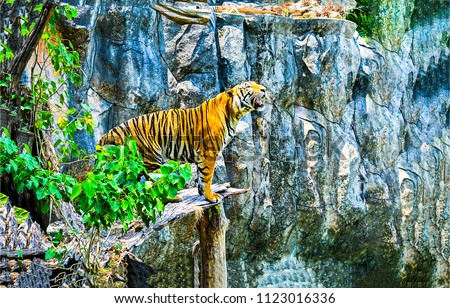 Stock Photo Tiger roaring on mountain cliff landscape. Tiger profile silhouette on cliff. Tiger wallpaper