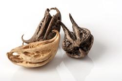 Tiger's Claw, Devil's Claw (Martynia annua L.) seeds or garuda nail in thailand.