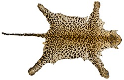 Tiger skin full body on white isolated background