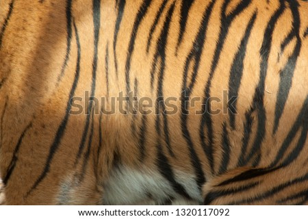 Tiger stripe pattern #1320117092