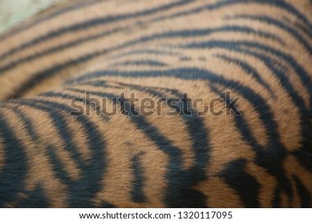 Tiger stripe pattern #1320117095