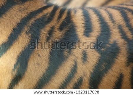 Tiger stripe pattern #1320117098
