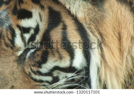 Tiger stripe pattern #1320117101