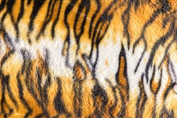 Tiger texture fur background