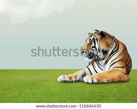 tiger under the sky with cloud on grass floor