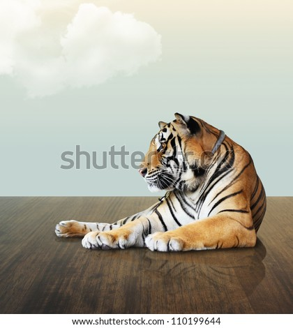 tiger under the sky with cloud on wood floor