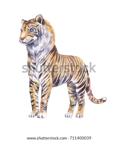 tiger watercolor  illustration, isolated on white background