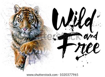 Tiger watercolor predator animals wildlife