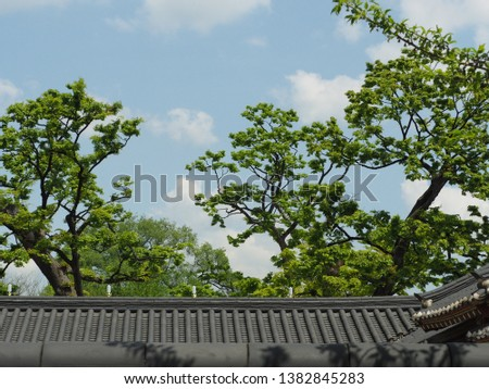 tile roof with big green trees, background in blue sky  #1382845283
