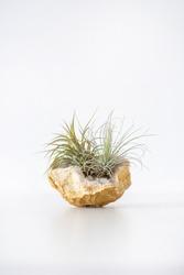 Tillandsia succulent air plant decoration in a semi-precious stone arrangement, home decor plant