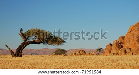 Tilted Tree in the Windy Desert