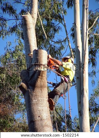Timber cutter up in tree